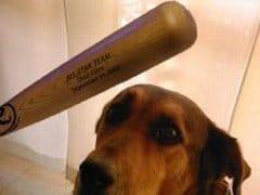 cane-bastonato