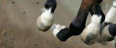 corse-clandestine-cavalli